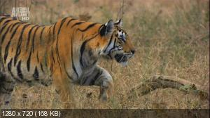 В дебрях Индии / Wildest India (2011) HDTVRip 720р