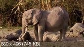 PBS: Природа – Эхо: Воспоминания о слонихе / PBS: Nature - Echo: An Elephant to Remember (Mike Birkhead / Майк Биркхед) [2010, документальный, BDRip 720p]