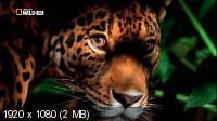 Атака больших кошек / Attack of the Big Cats (2012) HDTV 1080i