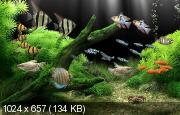 Dream Aquarium 1.2592 Screensaver - Repack
