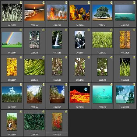 CorelDRAW Graphics Suite X6 ( Content, Rus, 2013 )